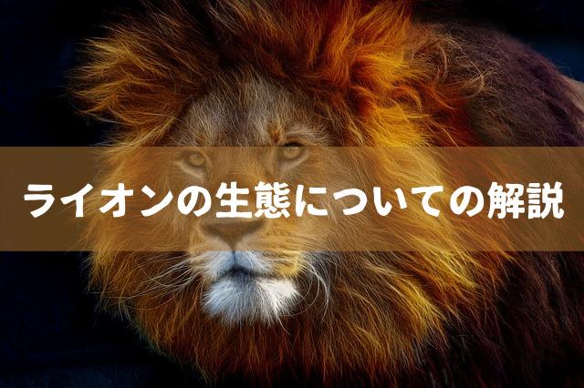 ライオンの生態についての解説